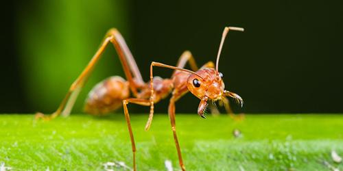 Ant Pest Control Richmond VA