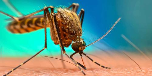 Mosquito Pest Control Richmond VA