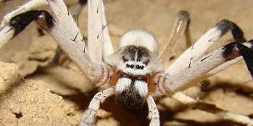 Spider Pest Control Richmond VA