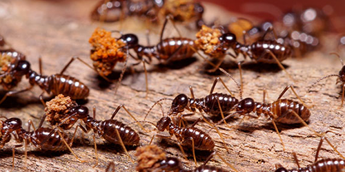 Termite Pest Control Richmond VA
