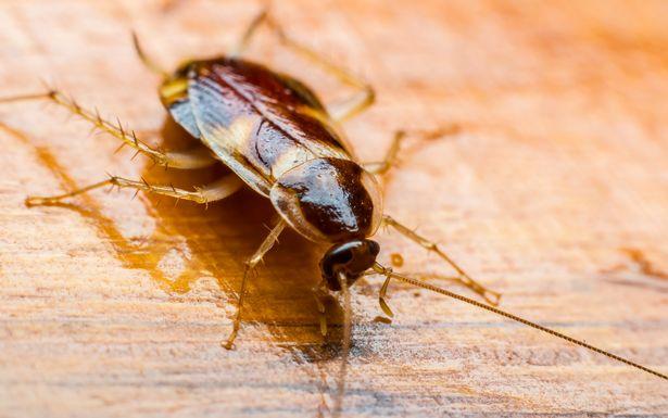 coackroaches richmond va